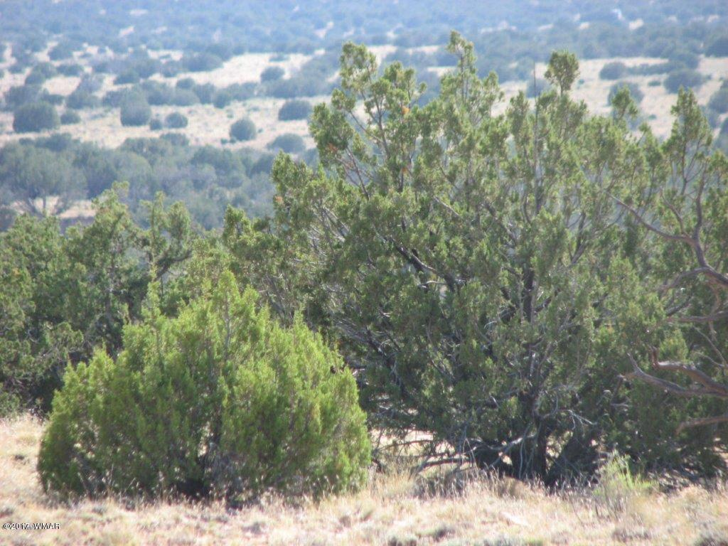 Lot 290 Chevelon Canyon Ranch #3 Overgaard, AZ 85933 - MLS #: 217195